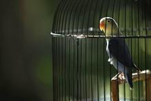 Световой день птиц