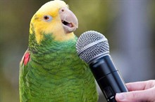 Почему домашняя птица не поет?