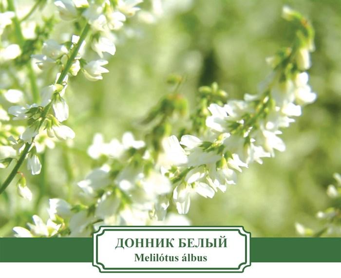 Сидерат Донник белый
