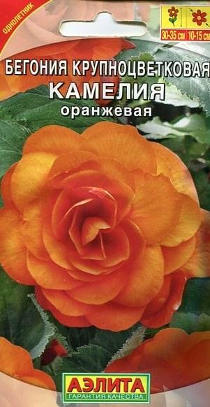 Бегония Камелия оранжевая