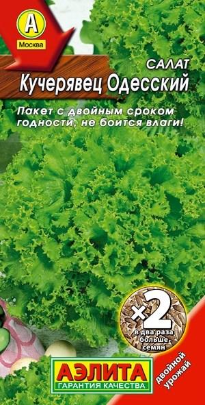 Салат Кучерявец Одесский полукочанный2