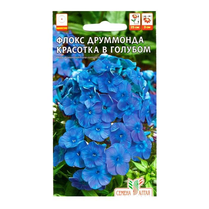 Флокс Красотка в голубом