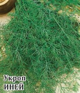 Укроп Иней