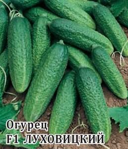 Огурец Луховицкий