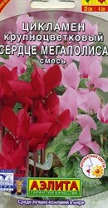 Цикламен персидский Сердце мегаполиса
