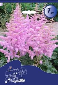 Астильба спирея розовая