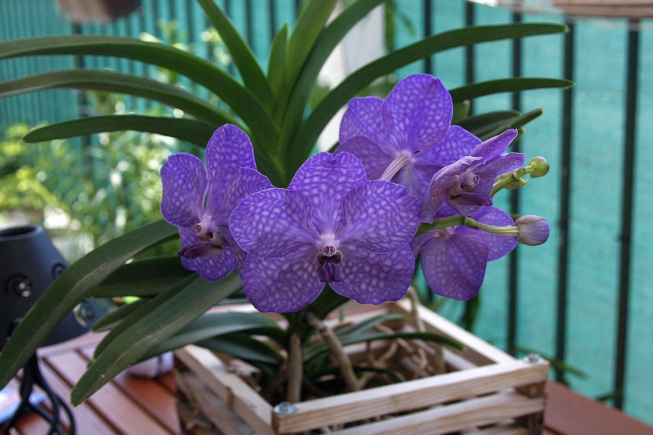 Виды орхидей с фото и уход в домашних условиях фото