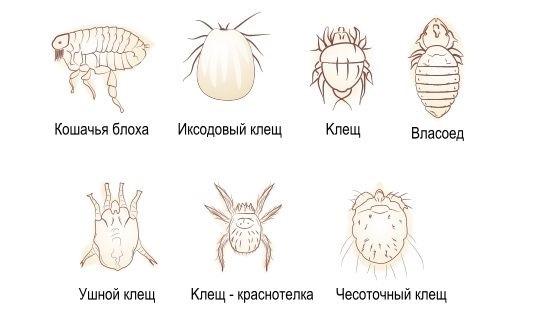 лечение паразитов у человека