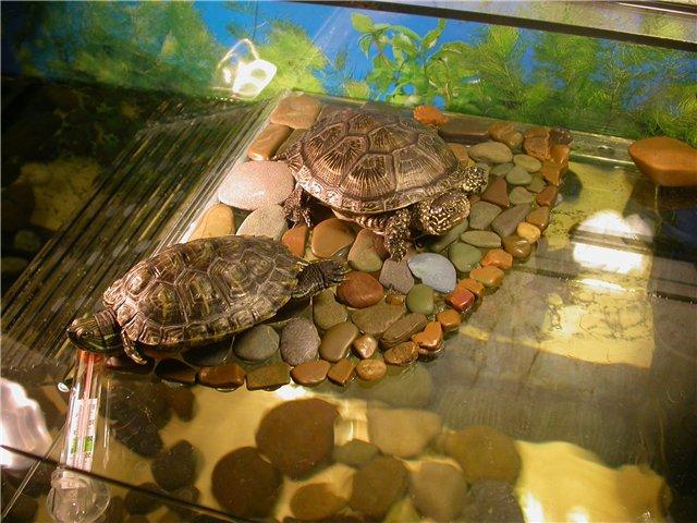 Из чего сделать островок для красноухой черепахи своими руками фото 6