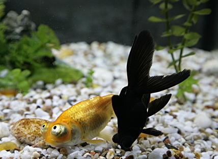 что делать если рыбки начали тонуть?