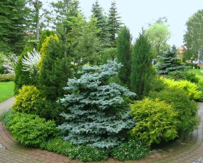 Ландшафтный дизайн хвойных растений фото
