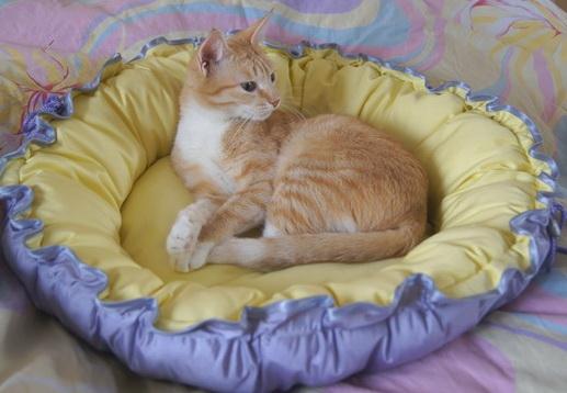 Кроватки для котов своими руками