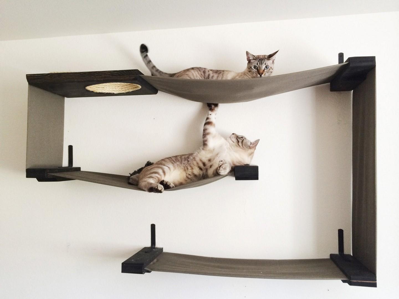 кот на полке cat on the shelf  № 1698010  скачать