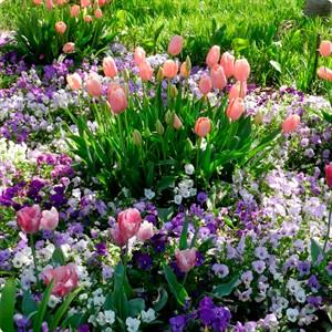 Устройство цветника