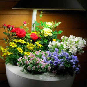 Подсветка комнатных растений