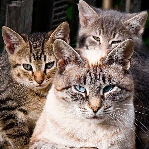 Садовые фигуры кошек