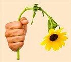 Как распознать и предотвратить стресс у растений