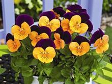 Разновидности весенних цветов