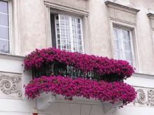 Украшаем балкон живыми цветами