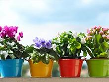 Подкормка цветущих растений летом