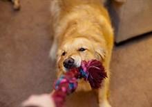 Полезные игры для собак