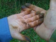 Как отмыть руки от грибов?