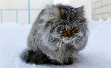Как зимуют уличные коты?