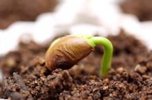 Ранняя подготовка семян к посадке