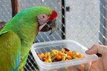 Зимний рацион попугаев