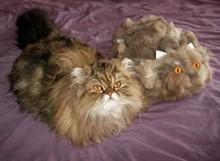 Чем кормить кота, чтобы не выпадала шерсть?