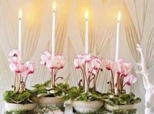 Новогодние композиции с комнатными растениями