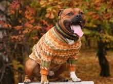 Как правильно снять мерки с собаки при выборе одежды?