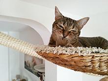 Создаем рай для кошек в квартире