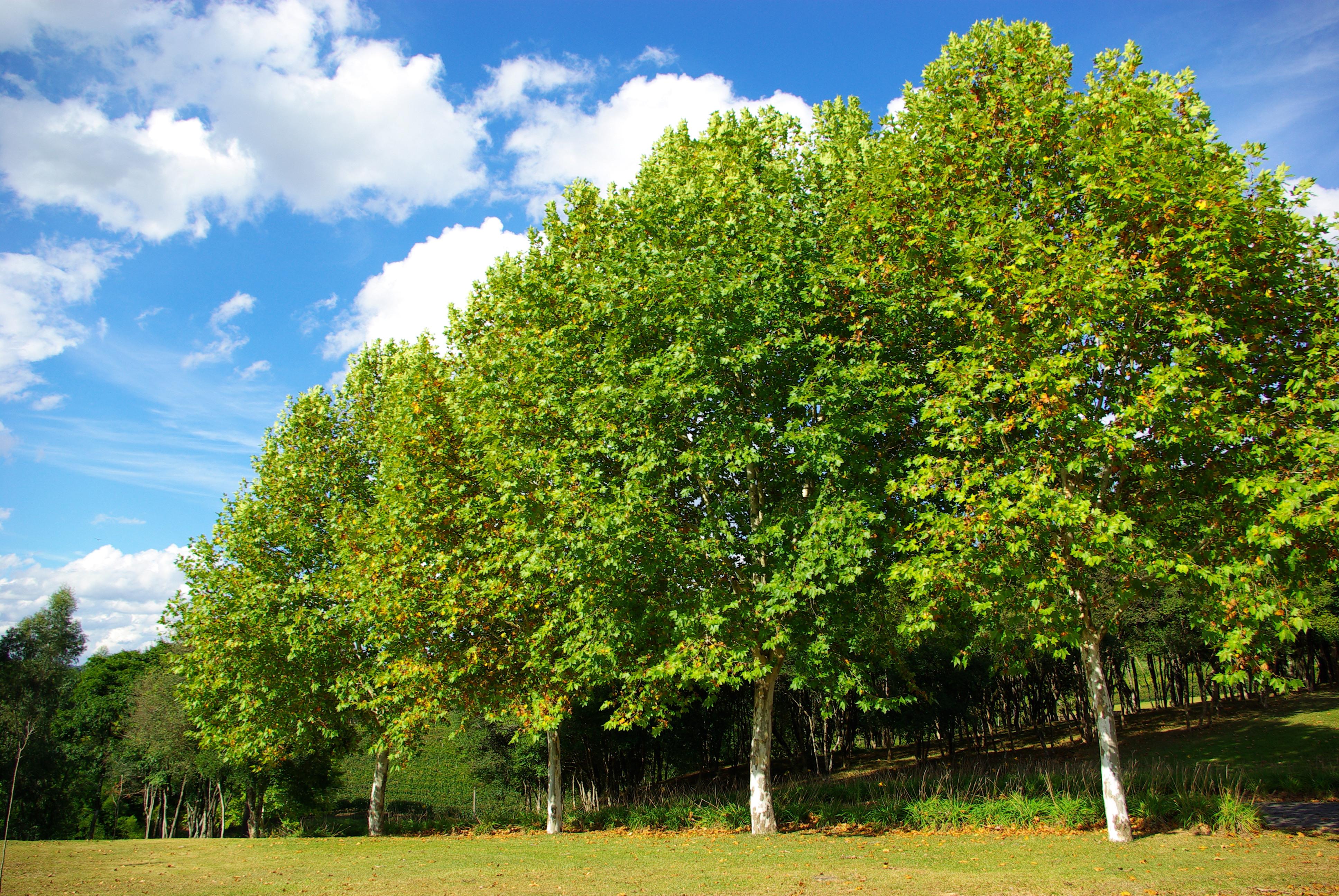 Народные приметы, связанные с деревьями. Часть 1