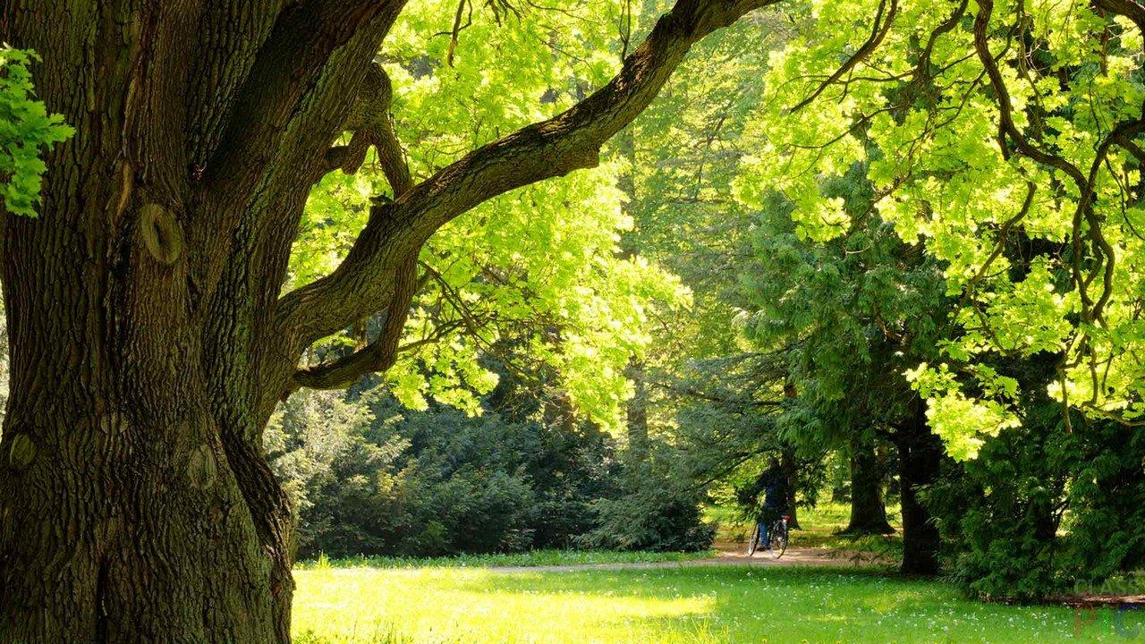 Народные приметы, связанные с деревьями. Часть 2