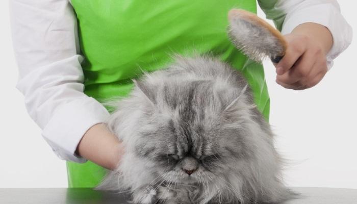 Весенняя линька у кошек и собак: что нужно знать?