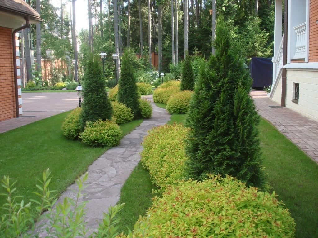 Какое хвойное растение выбрать для сада?
