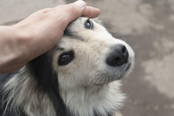 Собаки, которых лучше не гладить без спроса