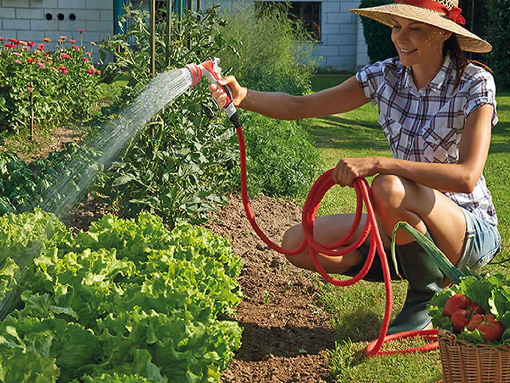 7 основных ошибок при поливе огорода