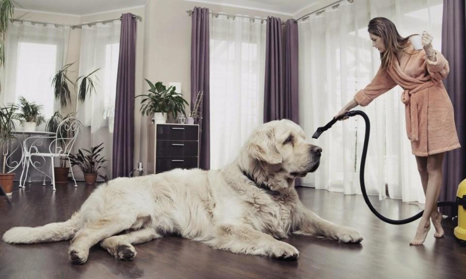 Собаки, которых не стоит заводить в квартире