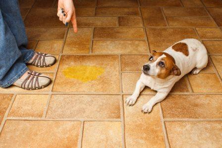 Как отучить домашнее животное гадить в неположенном месте?