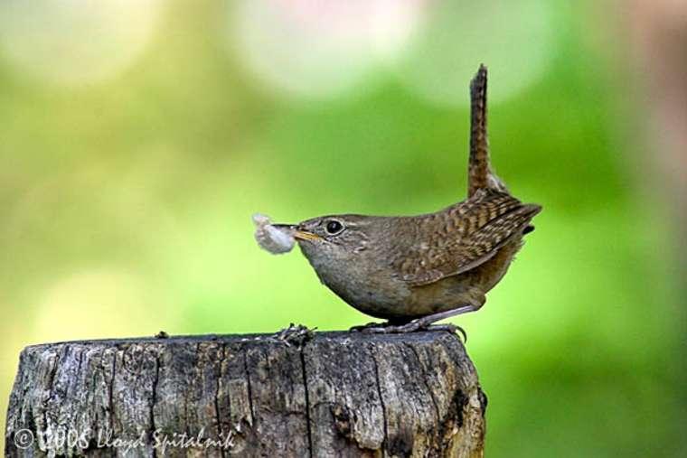 Борьба с птицами вредителями