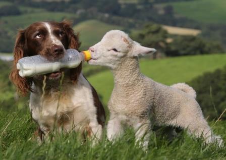 Собаки-помощники: их роль в жизни человека