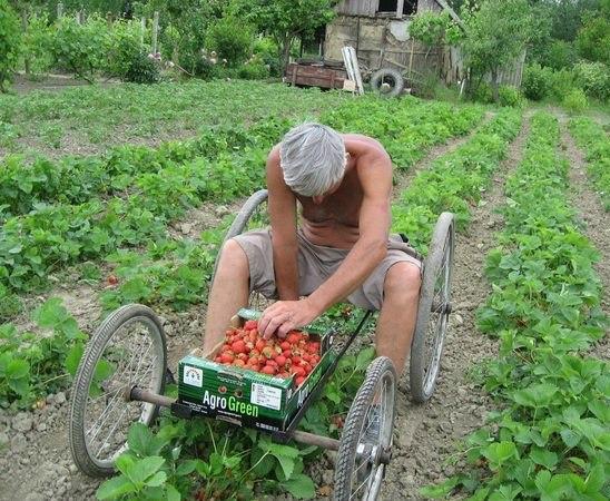5 лайфхаков для сбора урожая
