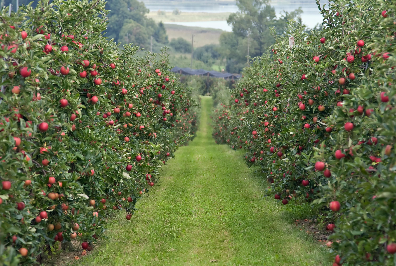Бизнес на выращивании плодовых культур