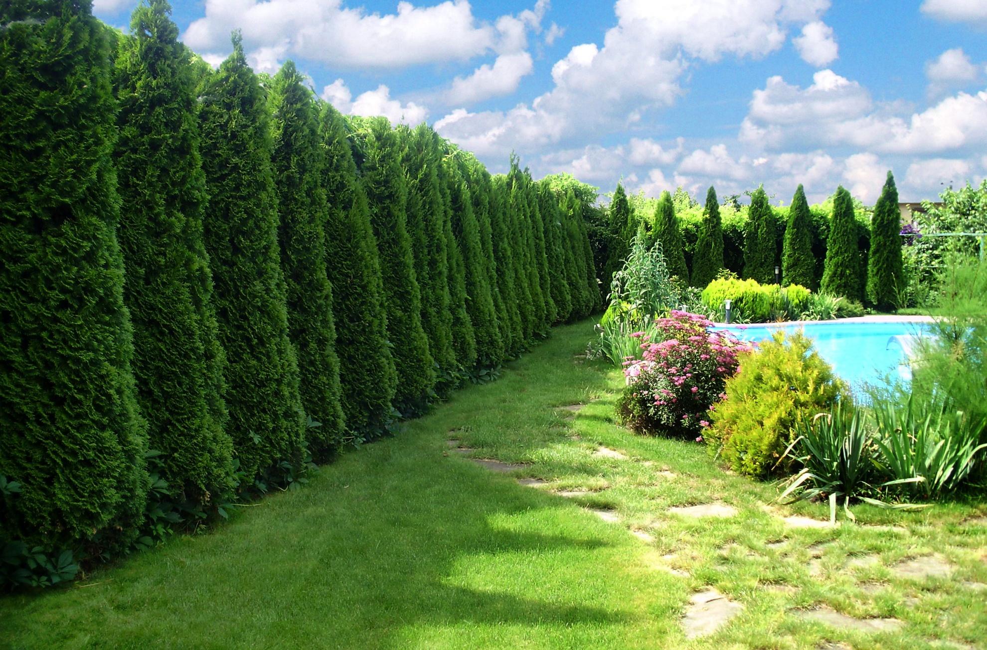 Живая изгородь: выбор растений и уход