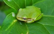 Содержание лягушек в домашних условиях