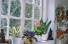 Комнатные растения,цветущие осенью и зимой