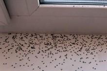 Как избавиться от мошкары в доме?