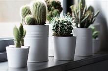 Мифы о кактусах